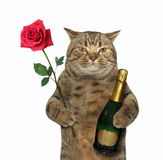 Cat with wine and a rose 2 Stock Photos