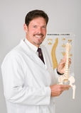 Handsome Chiropractor. Holding plastic replica of a spinal column stock image