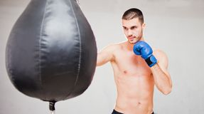 Handsome concentrated male boxer stock images
