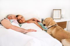 Handsome couple in bed sleeps together in association with dog. Handsome couple in bed sleeps together in association with their dog. A yellow labrador Royalty Free Stock Photo