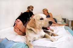 Handsome couple with their dogs on bed in morning. Young men and women spending time with their pets in bedroom. Happiness couple enjoying with their dogs at Stock Images