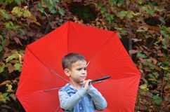 Handsome cute boy with brown eyes in a jeans jacket in the autumn park with a red umbrella, royalty free stock photos