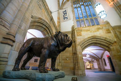 Handsome Dan of Yale University Royalty Free Stock Images