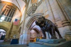 Handsome Dan of Yale University Royalty Free Stock Image