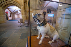 Handsome Dan of Yale University Royalty Free Stock Photography