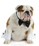 Handsome dog Stock Photos