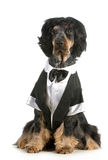 Handsome dog Royalty Free Stock Photos