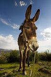 Handsome Donkey Stock Photo