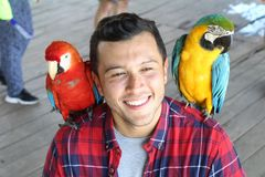 Handsome ethnic man and two colourful macaws.  royalty free stock photography