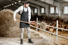 Farmer with hay in the stable. Handsome farmer in apron working with hay in the stable at the goat farm royalty free stock photos