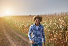 Farmer in corn field stock images