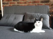 Handsome Feline Friend stock photo