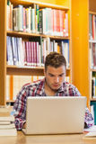 Handsome focused student using laptop Royalty Free Stock Images