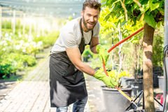 Handsome gardener watering tree Royalty Free Stock Images