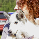 Handsome girl posing with dog. Handsome girl posing with husky`s puppy Stock Photo