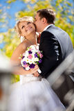 Handsome groom kissing bride in cheek at park Stock Image