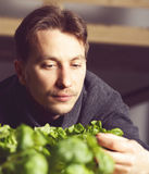 Handsome grower carefully growing and checking plants indoor. Royalty Free Stock Image