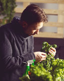 Handsome grower carefully growing and checking plants indoor. Stock Photo