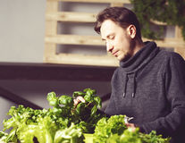 Handsome grower carefully growing and checking plants indoor. Royalty Free Stock Photography