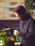 Handsome grower is carefully irrigating plants indoor. Royalty Free Stock Image