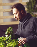 Handsome grower is carefully irrigating plants indoor. Stock Images