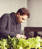 Handsome grower is checking and taking care of plants indoor. Royalty Free Stock Images