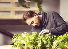 Handsome grower is checking and taking care of plants indoor. Stock Photography