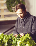 Handsome grower is checking and taking care of plants indoor. Stock Photo