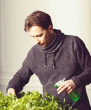 Handsome grower is watering potted plants indoor. Stock Photography