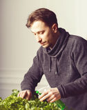Handsome grower is watering potted plants indoor. Royalty Free Stock Image