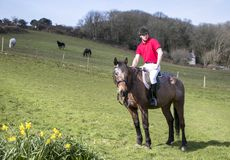 Handsome Male Horse Rider on horseback with white breeches, black boots and red polo shirt in green field with horses in backgroun Stock Photos