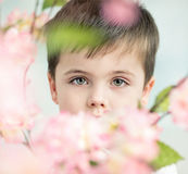 Handsome little man with a flower Royalty Free Stock Photo