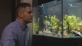 Handsome man looks at the fish. Handsome man looks at the fish in the aquarium at home stock video