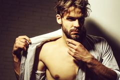 Handsome man touches beard. Handsome man or muscular blond macho athlete bodybuilder with six packs and abs on muscle torso in unbutton shirt touches beard on royalty free stock image
