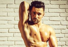 Handsome man or muscular macho. Bodybuilder, with sexy, muscle torso, body, with six packs and abs poses on white brick wall royalty free stock images