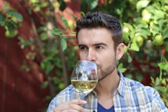 A handsome man smelling and drinking wine.  Royalty Free Stock Images