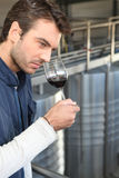 Handsome Man Smelling Wine Royalty Free Stock Image