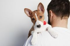 Handsome man snuggling and hugging his basenji puppy dog, close friendship against a white background. Handsome man snuggling and hugging his basenji puppy dog stock photos