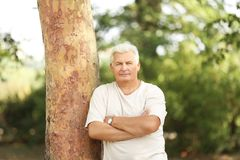 Handsome mature man. Near in park royalty free stock photography