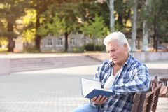 Handsome mature man reading book. On bench in park Stock Photography