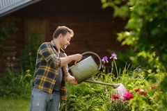 Handsome middle age man watering flowers in the yard in the summer. Gardening and floriculture royalty free stock image