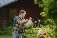 Handsome middle age man watering flowers in the yard in the summer. Gardening and floriculture stock photography