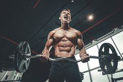Handsome model young man training arms in gym. Handsome muscular Caucasian man of model appearance working out training arms in gym gaining weight pumping up Stock Photography