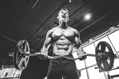 Handsome model young man training arms in gym. Handsome muscular Caucasian man of model appearance working out training arms in gym gaining weight pumping up Stock Photos