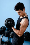 Handsome muscular sportsman uses his dumbbell royalty free stock images