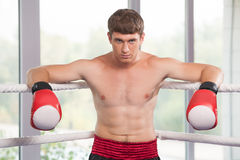 Handsome muscular young man wearing boxing gloves. Royalty Free Stock Photography