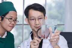Handsome professor holding magnifying glass in white suite. And glasses.They looking fighting fish in tank.Copy space royalty free stock images