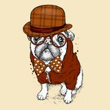 A handsome pug with glasses and a hat. Vector illustration for a postcard or a poster, print for clothes. Dog hipster in clothes. Royalty Free Stock Photography
