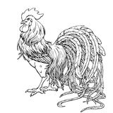 Handsome rooster black contour on white. Background. Fiery cock, chicken a symbol of the Chinese new year 2017 Stock Image