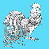 Handsome rooster coloring on blue Royalty Free Stock Photo